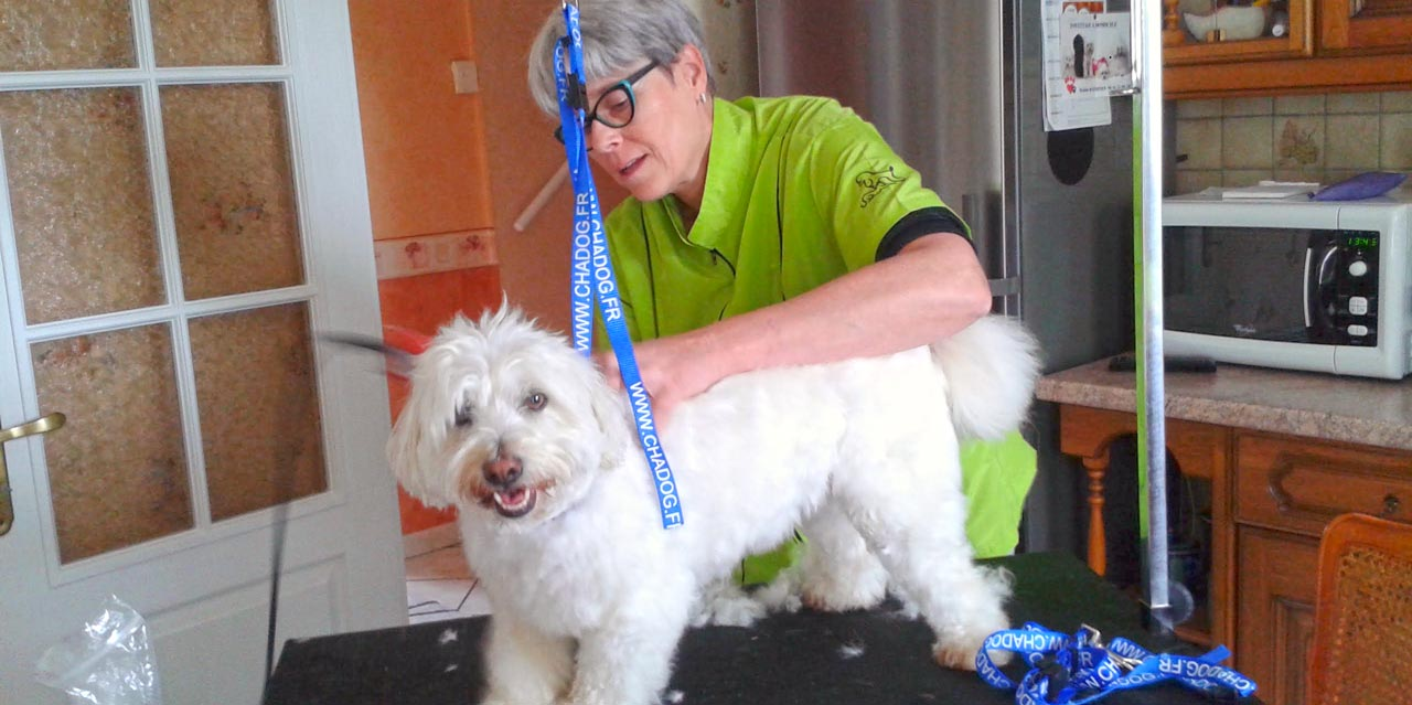 Toilettage pour chien à domicile